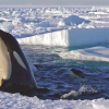 Baby, It's Cold Outside – Win 'Frozen Planet' on Blu-ray!