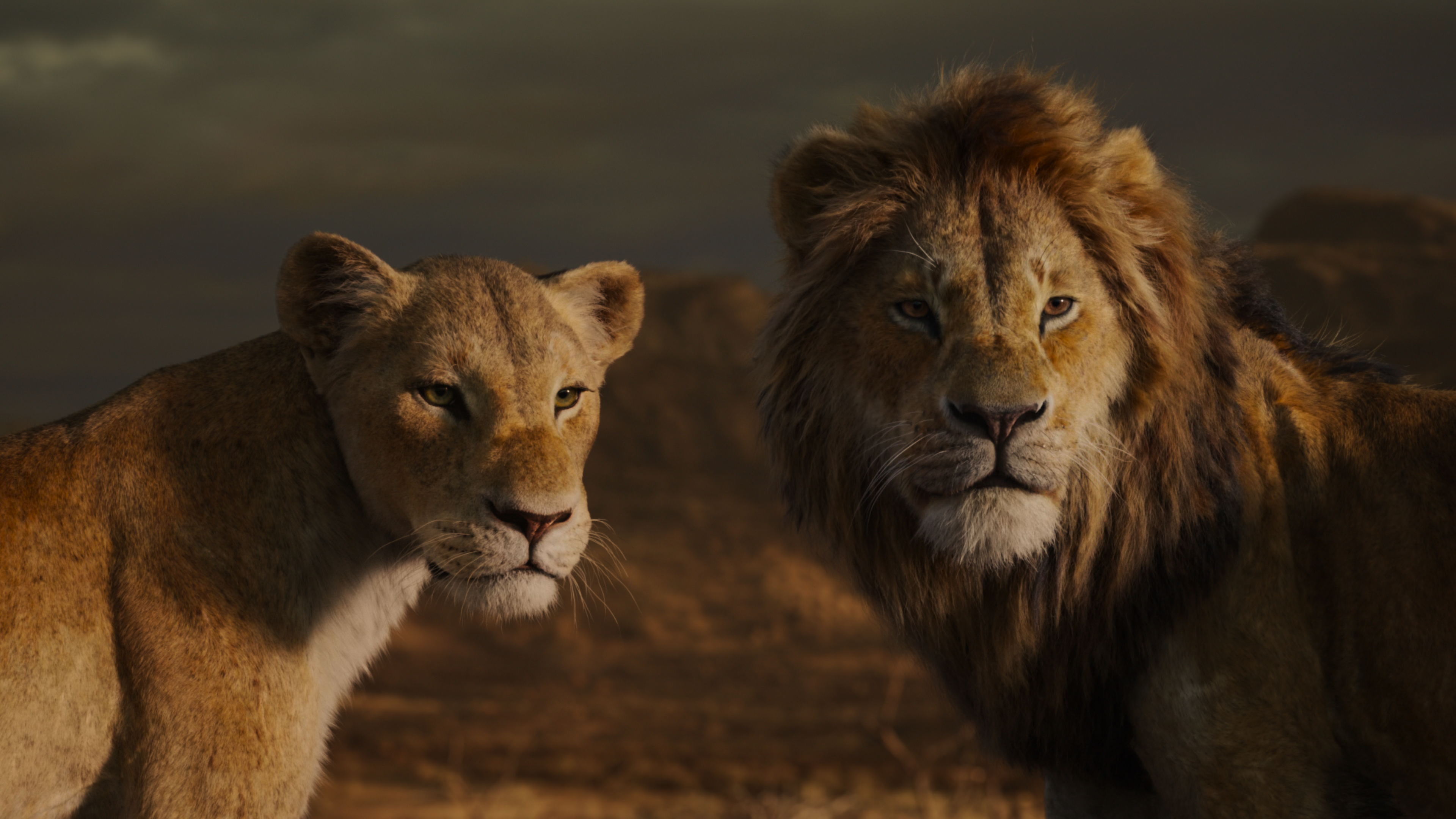 The Lion King 2019 4k Ultra Hd Blu Ray Ultra Hd Review High Def Digest